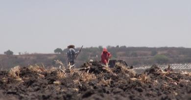 Falta de lluvias pone en riesgo una derrama de 4 mil millones de pesos en campo de Guanajuato.